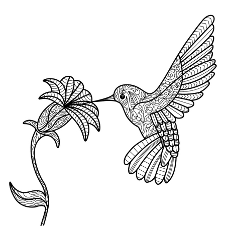 Hummingbird and flower coloring book for adults vector illustration. Illustration