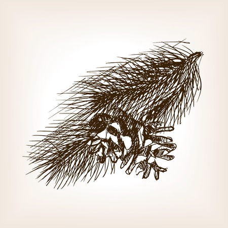 Pine branch and pinecone sketch style vector illustration. Old engraving imitation.