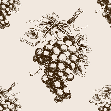 grape vines: Bunch of grapes  sketch style seamless pattern vector illustration. Old engraving imitation.