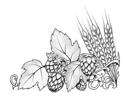 Stylish hop branch and barley hand drawn vector illustration Vector Illustration