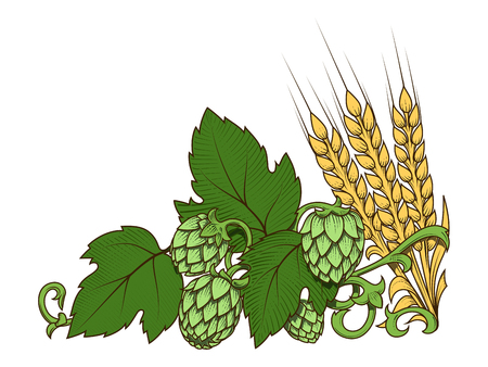 Stylish hop branch and barley hand drawn vector illustration Illustration