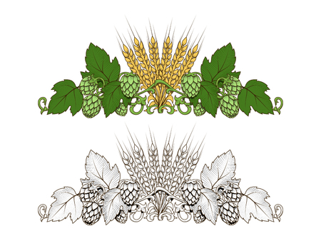 Stylish hop branch and barley hand drawn vector illustration