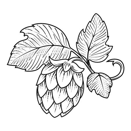 scratch board: Stylish hop branch hand drawn vector illustration