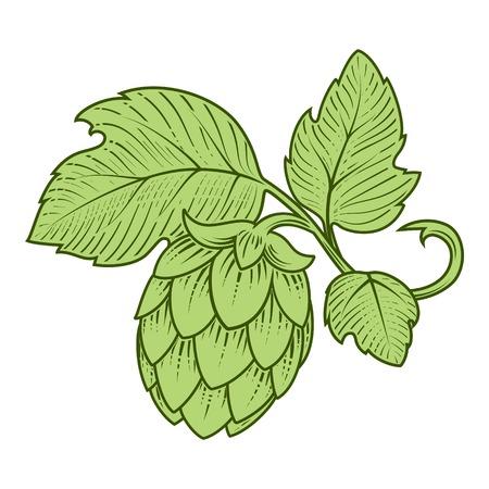 Stylish hop branch hand drawn vector illustration