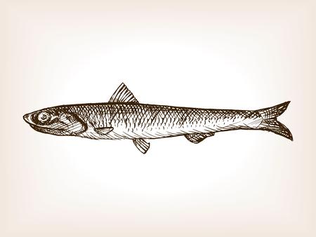 Acciuga pesci schizzo stile illustrazione vettoriale. Vecchio disegnata a mano incisione imitazione.