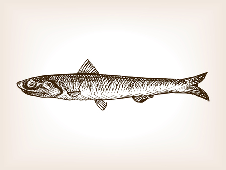 anchovy: Anchovy fish sketch style vector illustration. Old hand drawn engraving imitation. Illustration