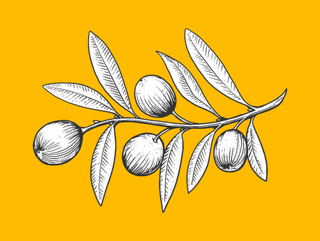 scratch board: Olive branch engraving style vector illustration. Scratch board style imitation