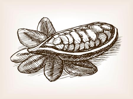 Cocoa bean plant sketch style vector illustration. Old engraving imitation. Vektoros illusztráció