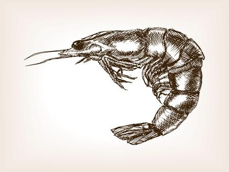 Shrimp sketch style vector illustration. Old hand drawn engraving imitation.