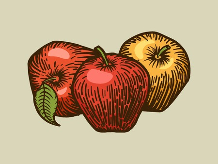scratch board: Apple engraving style vector illustration. Scratch board style imitation