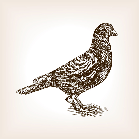 Post pigeon sketch style vector illustration. Old hand drawn engraving imitation.