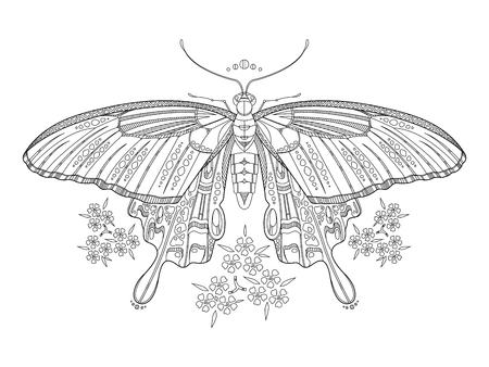 butterfly coloring book vector illustration anti stress coloring for adult black and white - Butterfly Coloring Book