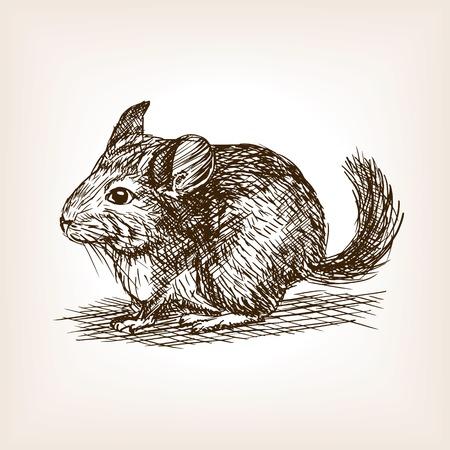 chinchilla: Chinchilla dog sketch style vector illustration. Old hand drawn engraving imitation. Illustration