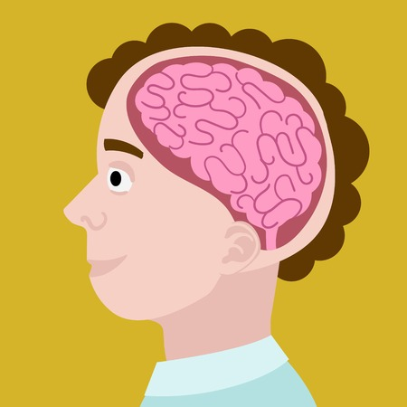 Human head in section. Cartoon brain in head. Colorful hand drawn cartoon vector illustration