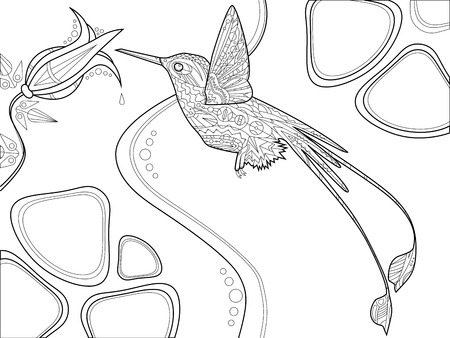 adults: Hummingbird and flower coloring book for adults vector illustration. Illustration