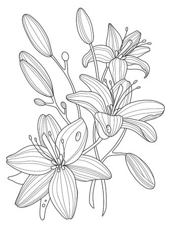 Lily Ilustración De Libros De Vectores Flores Para Colorear ...
