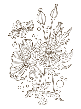 opium poppy: Poppy flowers coloring book vector illustration Illustration