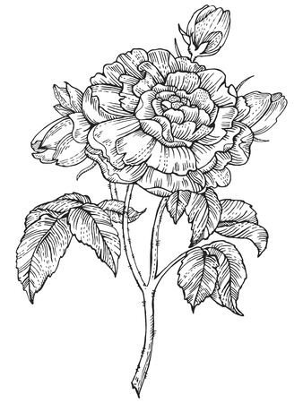 monochromic: Rose flower engraving style vector illustration