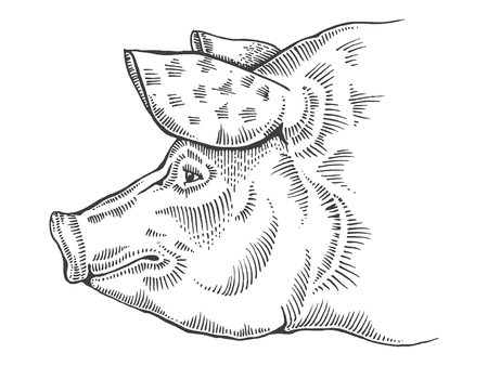 monochromic: Pig head engraving style vector illustration