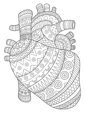 Ilustración De Vector De Libro De Colorear De Corazón Humano