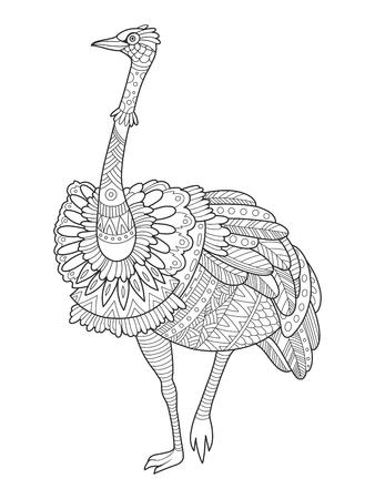 Struisvogel vogel kleurboek vectorillustratie. Zwarte en witte lijnen. Kantpatroon Stockfoto - 76866229