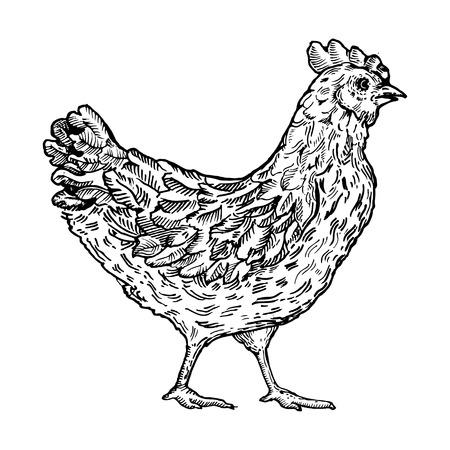 monochromic: Chicken bird engraving style vector illustration