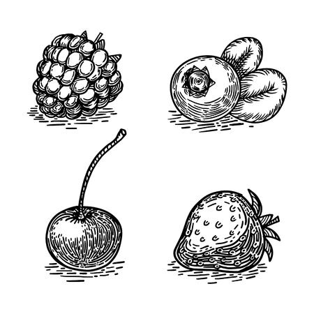 果実は彫刻スタイル ベクトル図をスケッチします。  イラスト・ベクター素材