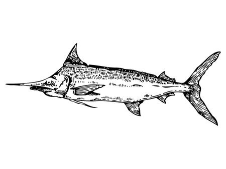 monochromic: Swordfish engraving style vector illustration