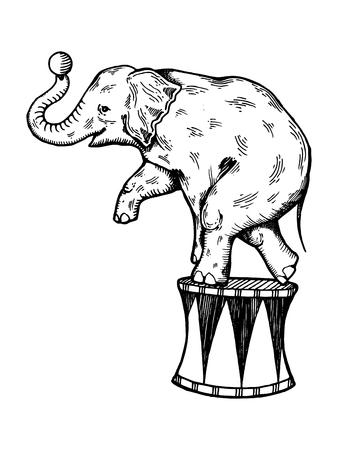 Vector de grabado de elefante de circo Foto de archivo - 80785308