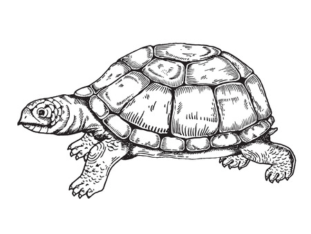 Turtle engraving style. Vettoriali