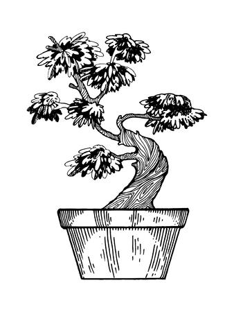 Japanse boom van de bonsai vectorillustratie. Krasplankstijl imitatie. Hand getrokken afbeelding. Stockfoto - 81955271