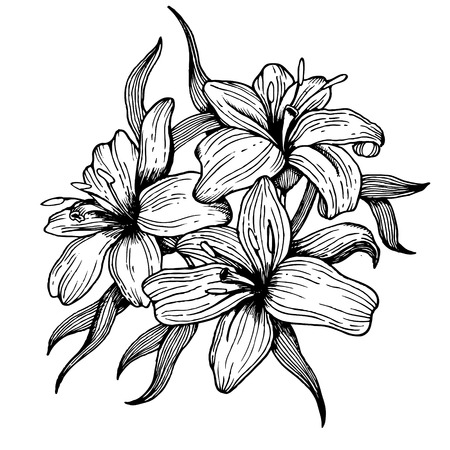 Lily flower engraving vector illustration. Scratch board style imitation. Hand drawn image.