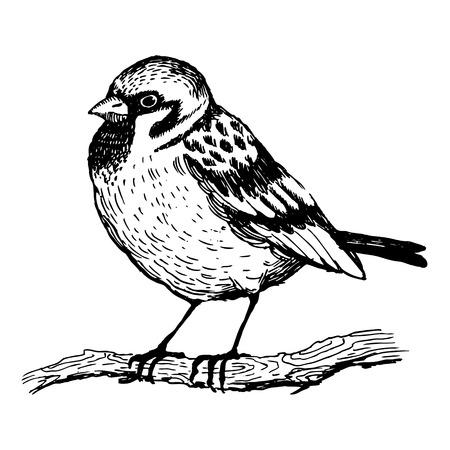 Moineau oiseau gravure illustration vectorielle. Imitation de style Scratch board. Image dessinée à la main. Vecteurs
