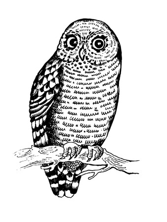 Owl bird engraving vector illustration. Scratch board style imitation. Hand drawn image.