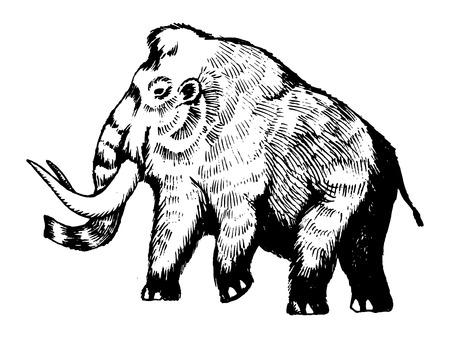 Mammutstichvektorillustration Standard-Bild - 86370674