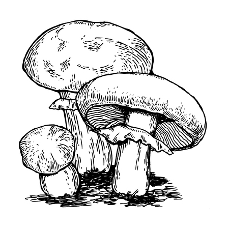 Mushrooms engraving vector illustration. Scratch board style imitation. Hand drawn image.