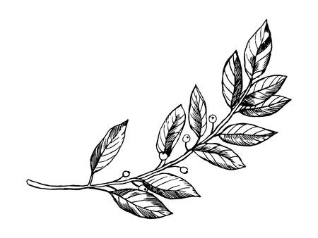 Laurel branch gravure vector illustratie. Krasplankstijl imitatie. Hand getrokken afbeelding.