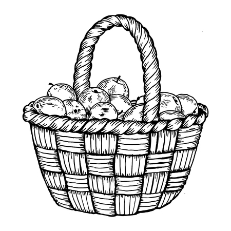 Basket with apples engraving vector illustration. Scratch board style imitation. Hand drawn image.