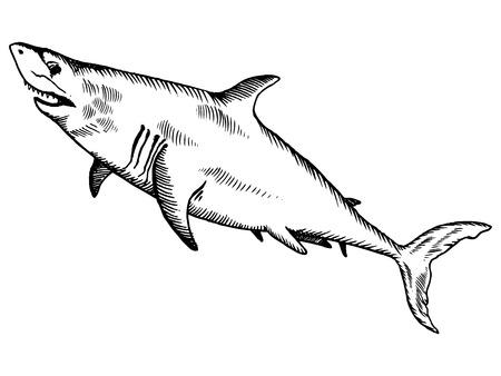 Shark engraving vector illustration Imagens