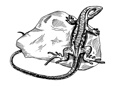 Lizard on stone animal engraving. Ilustracja