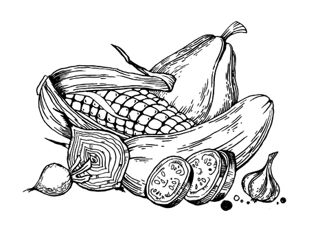 Still life vegetables engraving vector illustration. Scratch board style imitation. Hand drawn image.