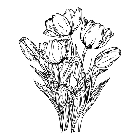Bouquet of tulips vector illustration