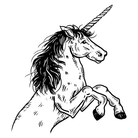 Unicorn engraving vector illustration.