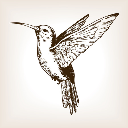 Humming bird engraving vector illustration