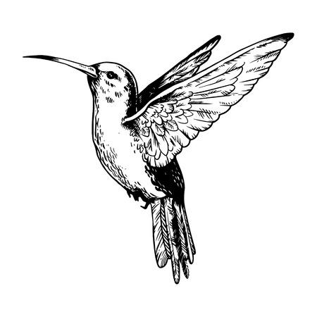 2556 Humming Bird Cliparts Stock Vector And Royalty Free Humming