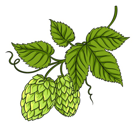 Branch of hops pop art vector illustration