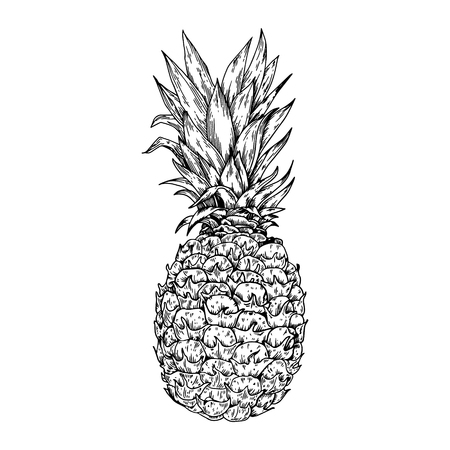 Pineapple fruit engraving vector illustration. Scratch board style imitation. Hand drawn image.