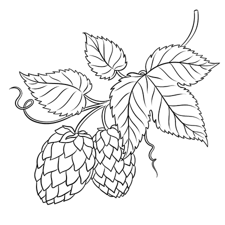 Branch of hops coloring book vector illustration. Isolated image on white background. Comic book style imitation.