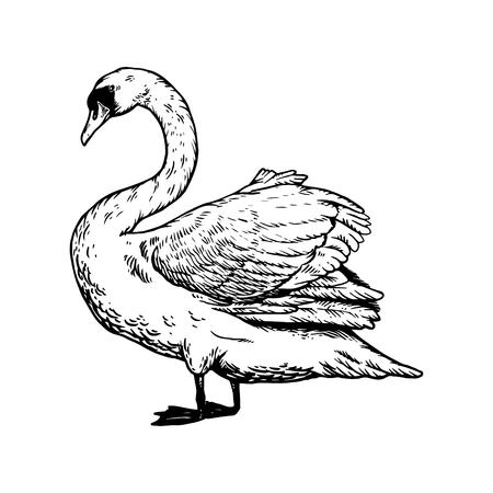 Swan bird engraving vector illustration