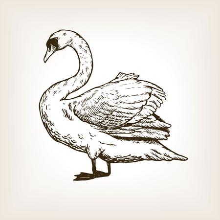 Illustrazione di vettore dell'incisione dell'uccello del cigno Archivio Fotografico - 93396617